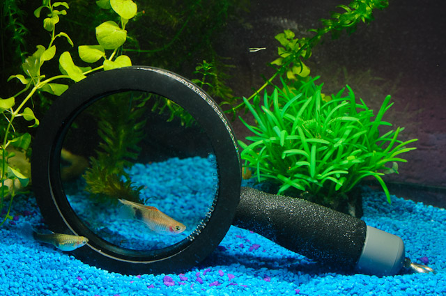 underwater-magnifying-glass-2013-fish-tank