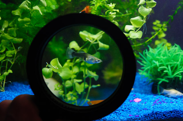 underwater-magnifying-glass-2013-fish